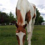 Maranda Paz Horse